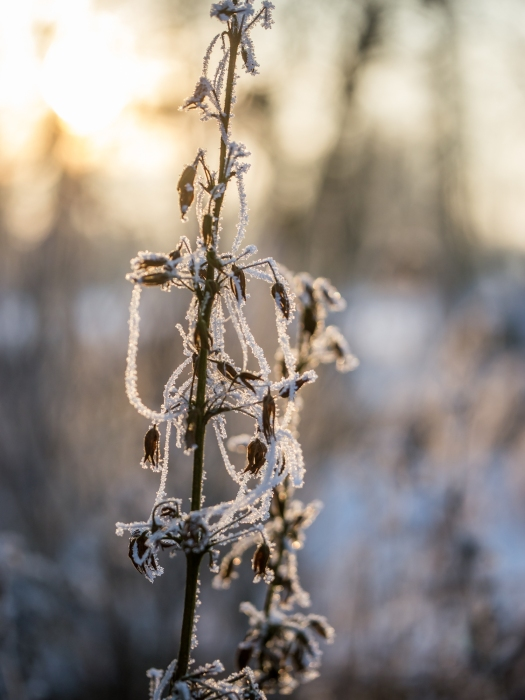 Frost-1030732