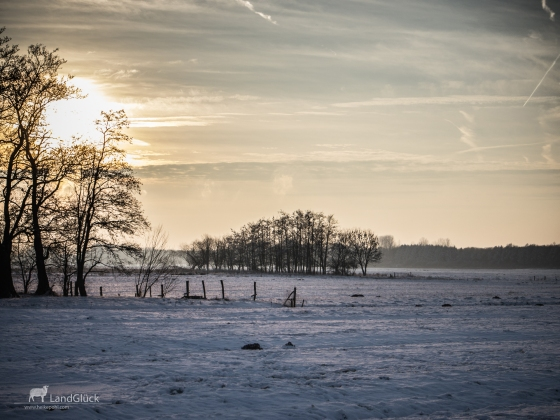 Frost-1030743