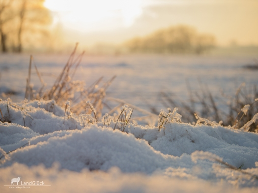 Frost-1030744